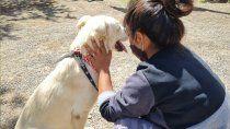 cada semana, dos animales rescatados consiguenhogar