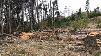 combustible con residuos forestales, la propuesta de un vecino de villa la angostura