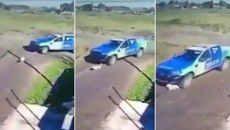 Video indignante: policías atropellaron con un patrullero a un pequeño perro