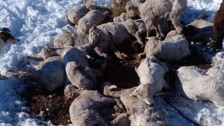 El temporal dejó chivas y ovejas muertas a su paso