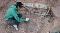 nuevo dino neuquino devela el origen de los gigantes de cuello largo