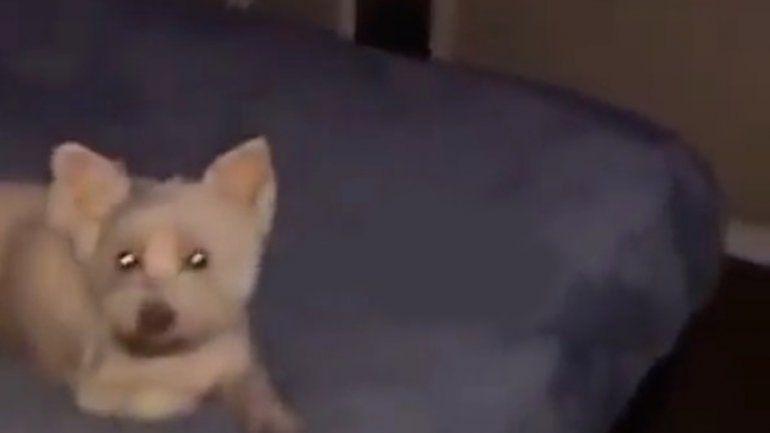 El video asusta a todos en TikTok