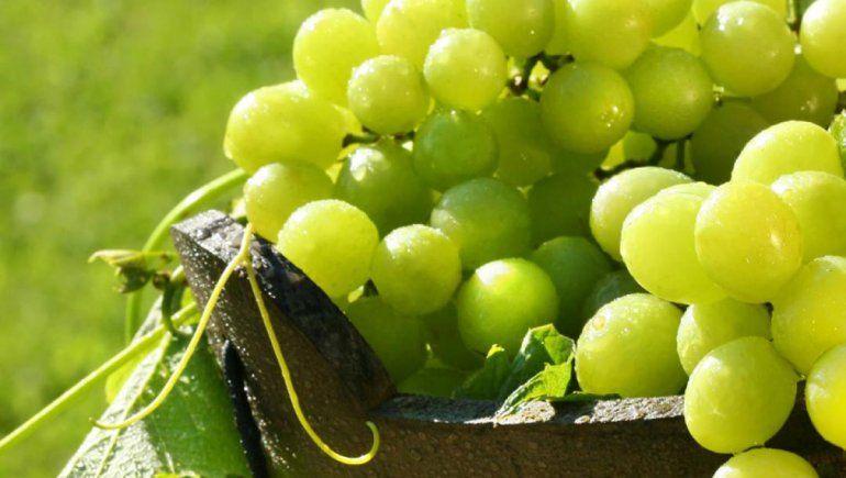 ¿Un vino par descubrir?: Probá con el Semillón