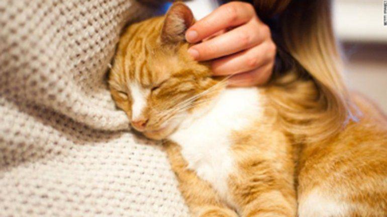 Un gato doméstico dio positivo para coronavirus en Reino Unido