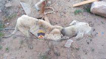 rescataron a un perro en allanamiento por maltrato animal