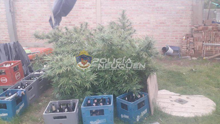 Además del arma de fuego, la Policía secuestró varias plantas de marihuana.