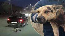 enfermo: ato el perro al auto y lo arrastro a gran velocidad