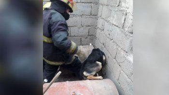 Perro quedó atrapado en una obra y Bomberos fueron al rescate
