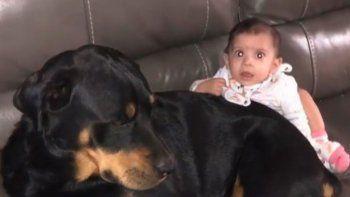 dos rottweilers mataron a una beba de 10 meses