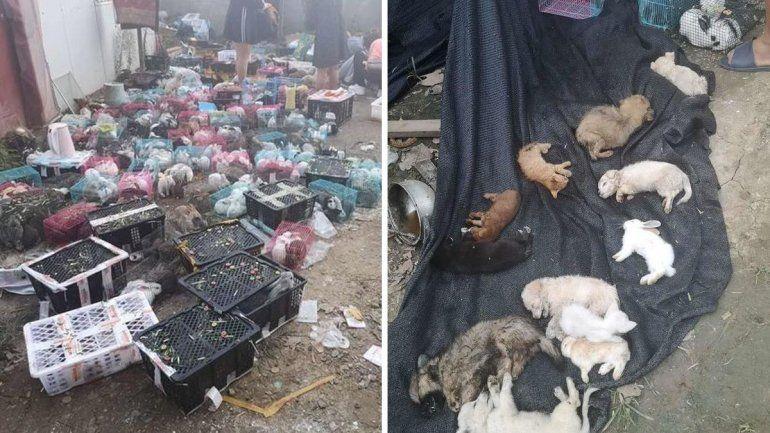 China: descubren 5 mil gatos y perros muertos en un almacén