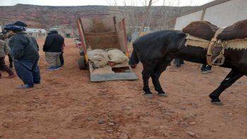 Añelo: culpan a vecinos irresponsables por la matanza de ovejas