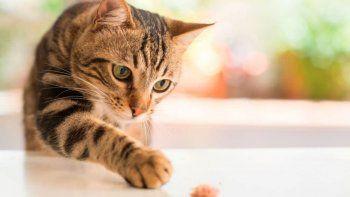TikTok: gato entró a la cocina y causó un gran desastre. | Foto referencial.