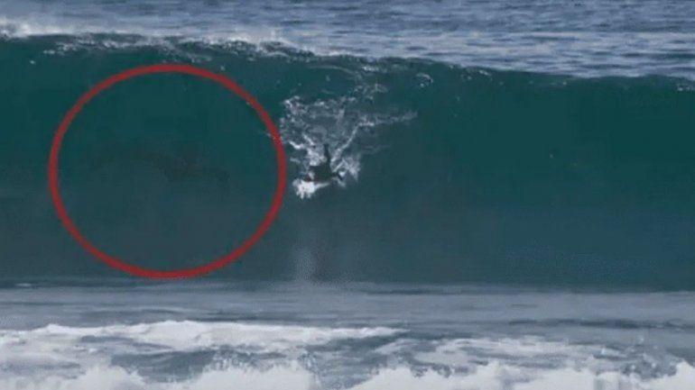 Surfista agonizó dos días solo en una playa y a otro lo persiguió extraña criatura