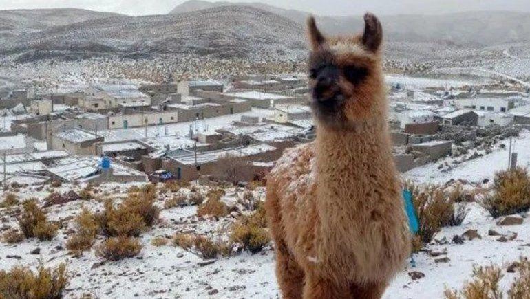 Jujuy: nevó en pleno verano y los cerros amanecieron blancos