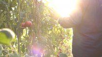 horticultura: ¿que significa que comienzan a regir las buenas practicas agricolas?