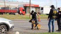 la historia de maximo, el perro que descubre a los narcos