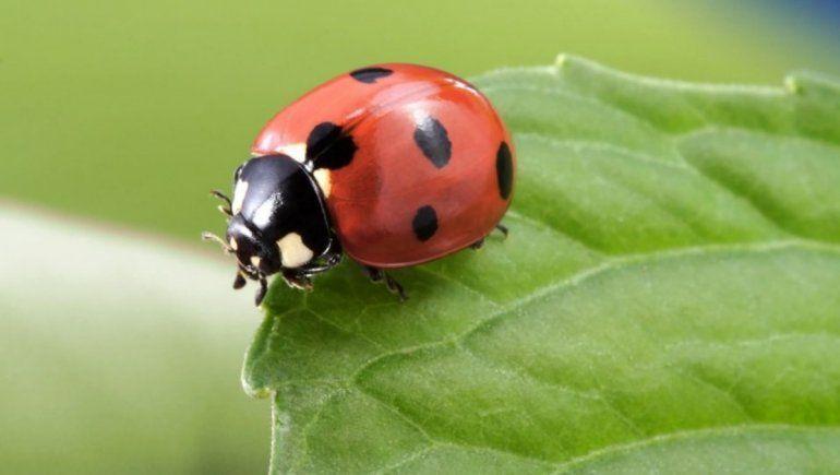 Twitter: hombre descubrió que un insecto vivía dentro de su intestino.