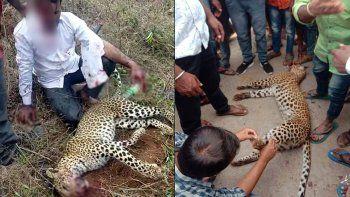 mato a un leopardo a golpes y salvo a su familia