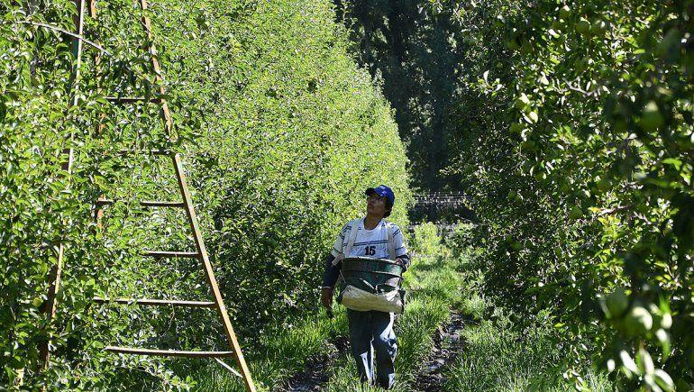 Por la cosecha, entraron a la provincia 10 mil trabajadores migrantes