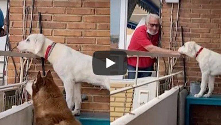 Estos perros no dejan de sumar reproducciones en YouTube