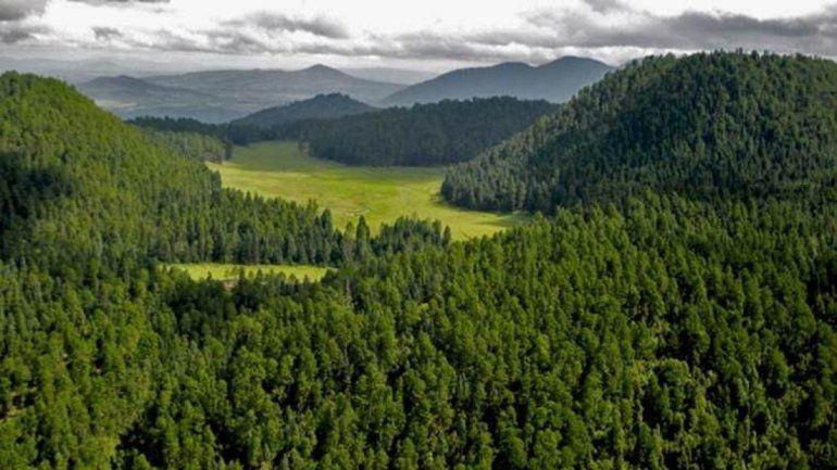 Soñar con un bosque encierra una advertencia