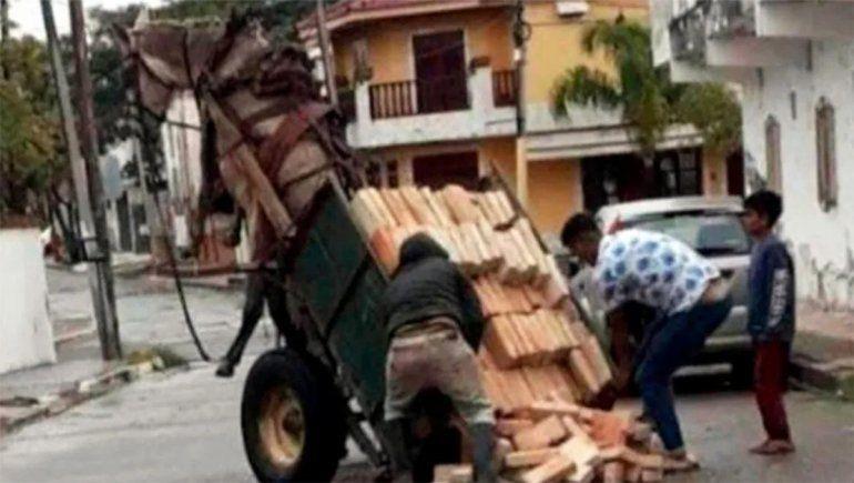 Maltrato animal: un caballo quedó en el aire por la gran carga que transportaba