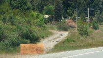 mascardi: tras una brutal tala, los encapuchados venden lena