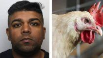 un depravado: violaba gallinas mientras la esposa lo filmaba