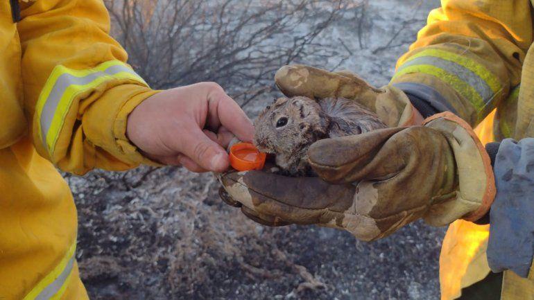Incendio en Picún Leufú