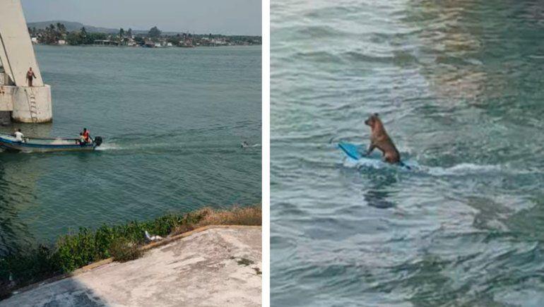 Perrito es viral en YouTube por demostrar su habilidad para surfear.