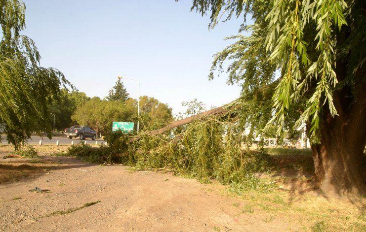 Por el fuerte viento se le cayó una pesada rama encima: está grave