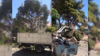 Interviene la Justicia por la extracción del antiguo árbol de la Avenida