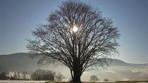 solsticio de invierno: cuando es y que propone el cambio de estacion