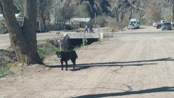 piedra del aguila: vecinos denuncian envenenamiento masivo de perros