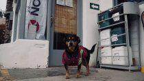 la historia del perro playero que conquista a los turistas en piedra del aguila