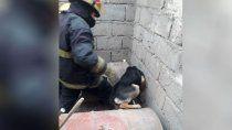 perro quedo atrapado en una obra y bomberos fueron al rescate