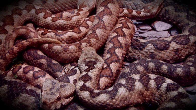Viral: una mujer sorprende al capturar serpiente con sus manos