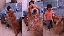 el tierno video del perro que defendio a una nina del reto de su madre
