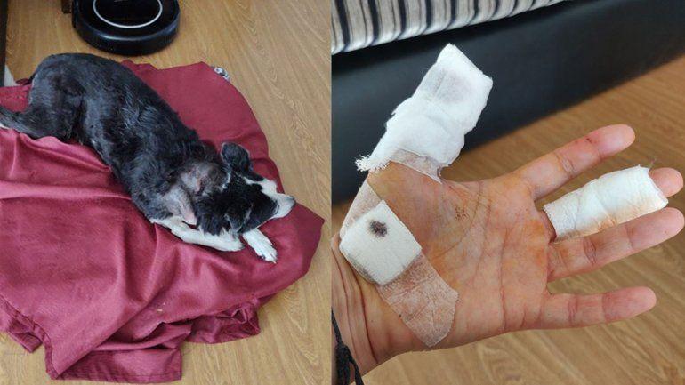La perrita atacada en el Paseo de la Costa tiene una infección y su dueña pide ayuda