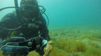 """""""He visto de todo bajo el agua, pero caballitos es la primera vez"""", contó sorprendido Agustín."""
