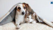 ¡mucho cuidado!: las mascotas tambien pueden sufrir el frio