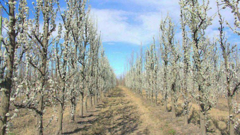 Los productores alertan sobre los problemas del protocolo de cosecha