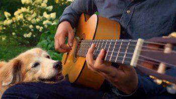 Twitter: músico dedicó conmovedora despedida a su hermosa perrita fallecida.