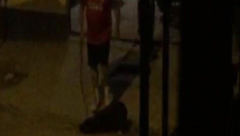 Ex policía pateó a su perra y lo acusaron por crueldad animal
