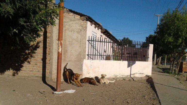 Multaron a una vecina por ayudar a los perros callejeros