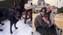 neuquina desesperada: le perdieron la perra y la busca en la pampa
