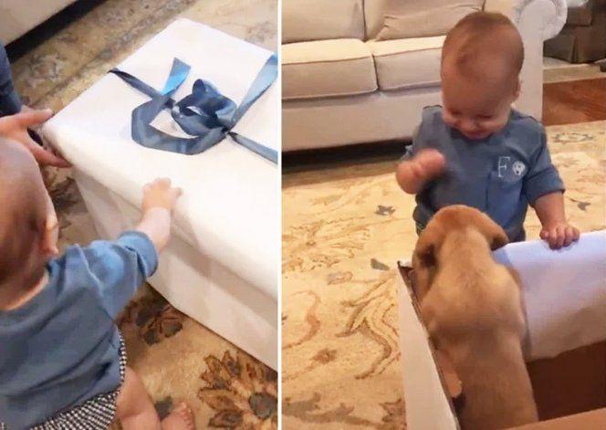 El video se hizo viral por la reacción de alegría del bebé al ver al cochorro.
