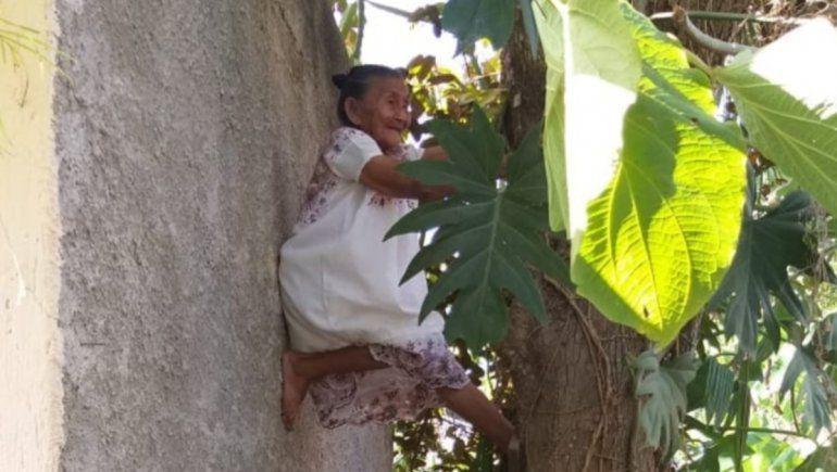 Facebook: captan a una abuelita trepando un árbol y se vuelve viral