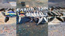 pesca furtiva: incautan 46 truchas en operativo de transito
