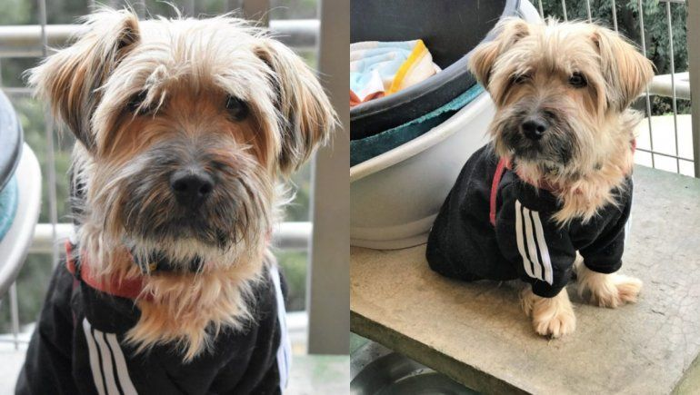 Twitter: la emotiva carta para pedir que adopten a un perrito.